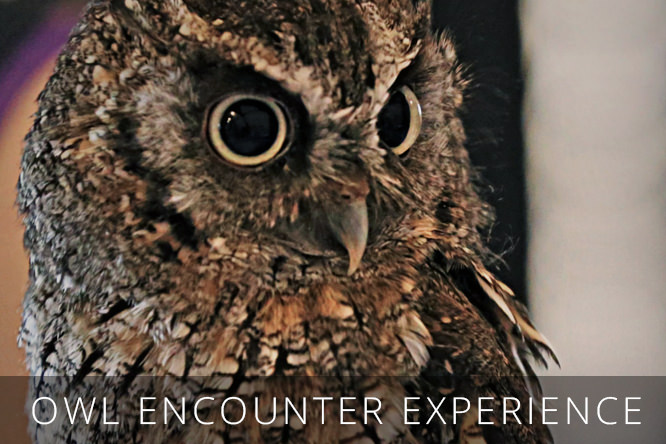OWL-ENCOUNTER