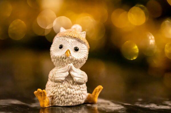 owl-5855899_1920